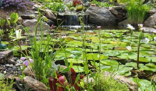 Planted Water Garden