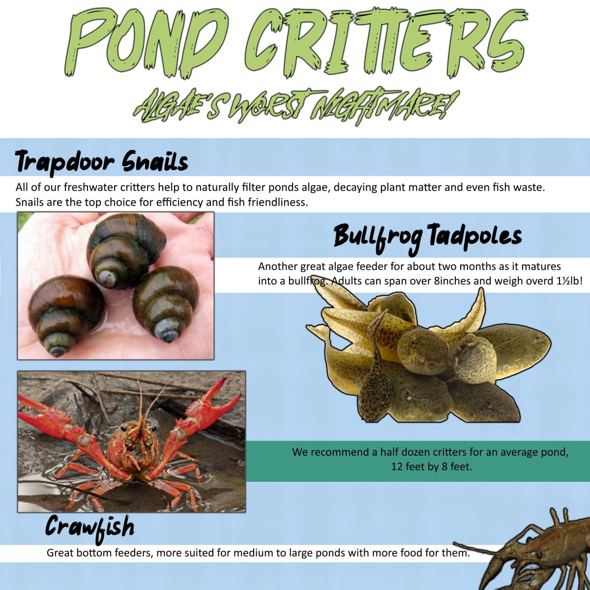 Crawfish, Trapdoor Snails and Bullfrog Tadpoles